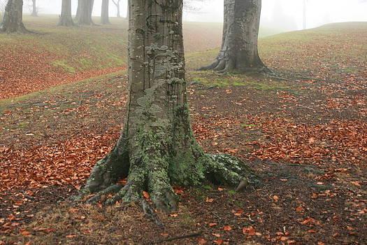 Terry Perham - last leaves of autumn