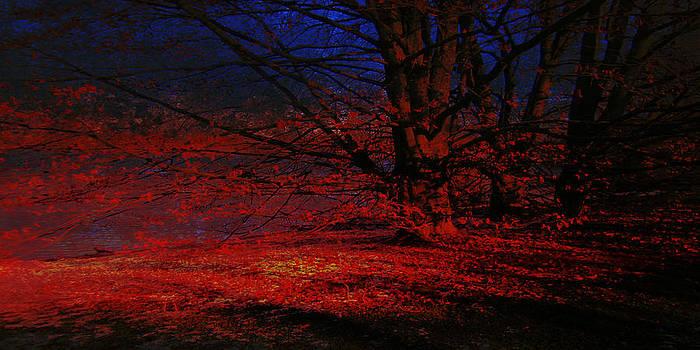 Last light by Florin Birjoveanu