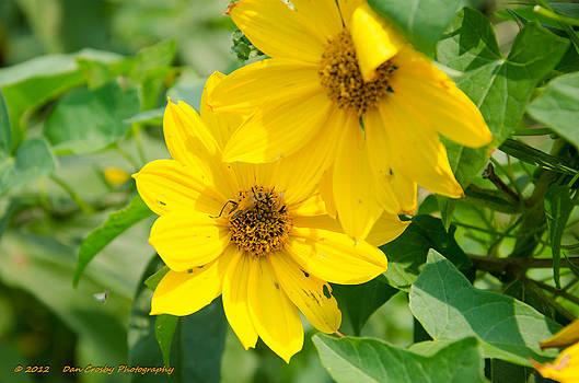 Late Summer Blooms by Dan Crosby