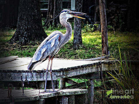 Laughing Heron by Karen White