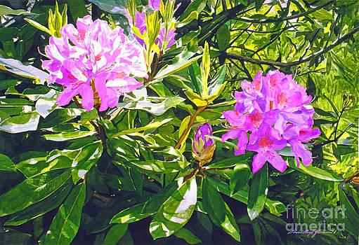 David Lloyd Glover - Lavender Rhododendrons