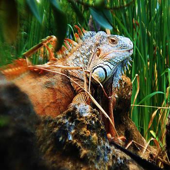 Lazy Lizard Lounging by Joy Braverman