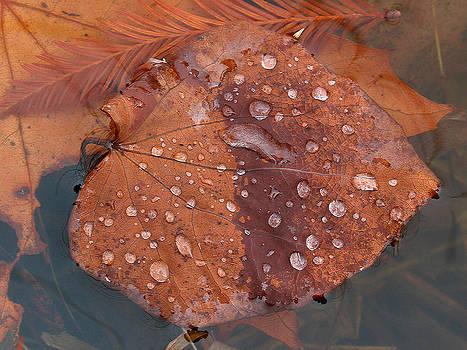 Juergen Roth - Leaf Blues