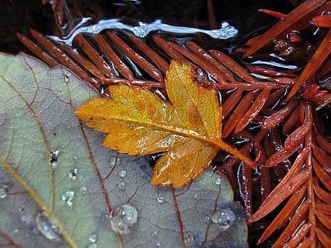 Juergen Roth - Leaf in Repose