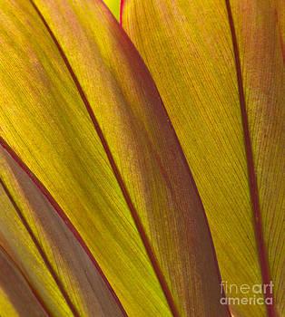 Sandra Bronstein - Leaf Patterns