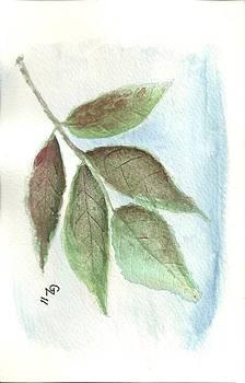 Leaf Study V by Gary Zimmerman