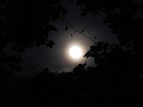 Shane Brumfield - Leafy Moon