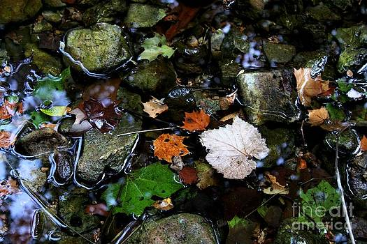 Leaves and Stones by Theresa Willingham