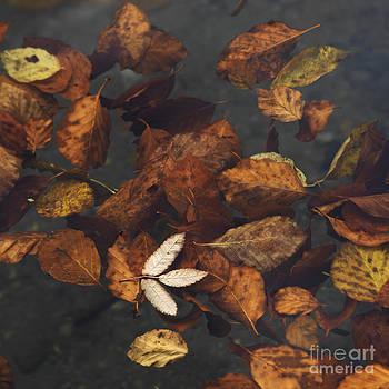 BERNARD JAUBERT - Leaves in a lake
