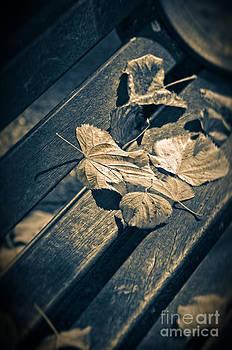 Silvia Ganora - Leaves on bench