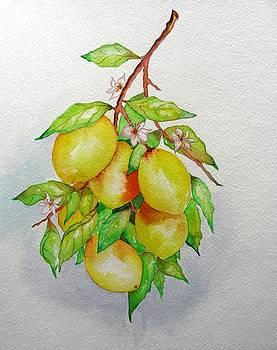 Lemons by Elena Mahoney