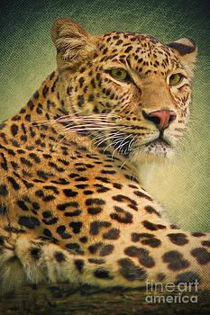 Angela Doelling AD DESIGN Photo and PhotoArt - Leopard