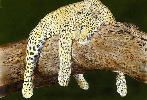 Leopard at Rest by Yvonne Scott