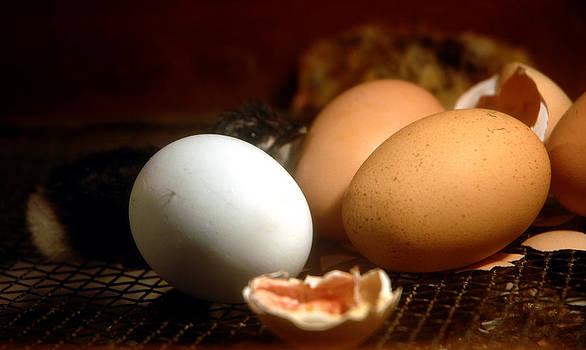 LeeAnn McLaneGoetz McLaneGoetzStudioLLCcom - Lets Get Cracken Chicks