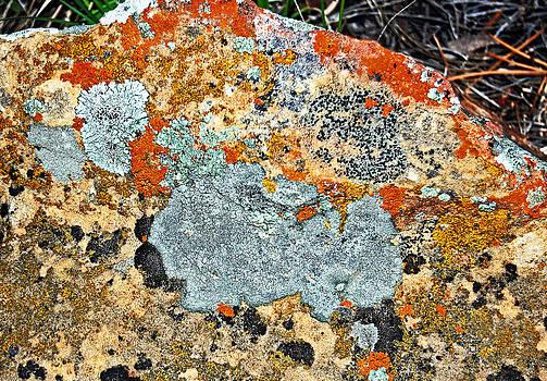 Lichens 2. by Randall Templeton