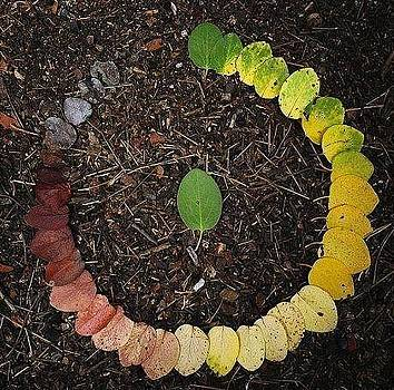 Life cycle of leaf by Sunkies Fang