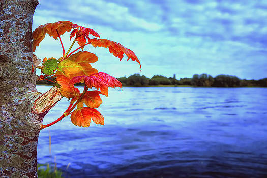 Life...Reborn by Kim Shatwell-Irishphotographer