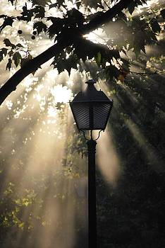 Light by Amee Cave