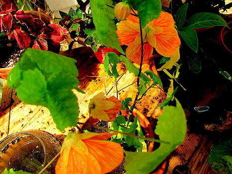 Light Orange Blooms by Amy Bradley