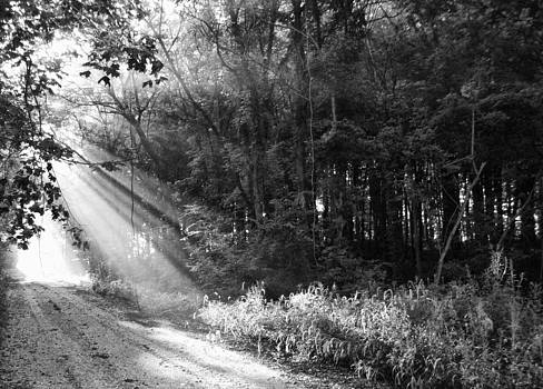 Off The Beaten Path Photography - Andrew Alexander - Light Through The Trees