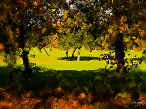 Light.Shade.Tree.Shadow. by Johnny Trippick