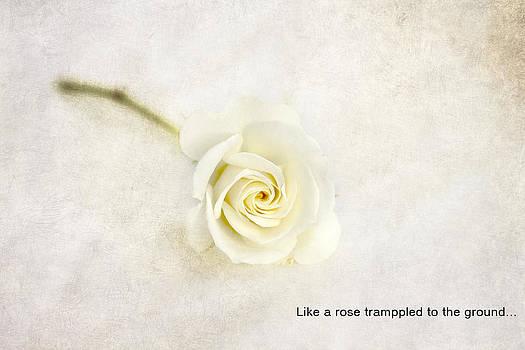 Like a rose... by Taschja Hattingh
