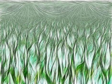lilie Field by Linda Gesualdo