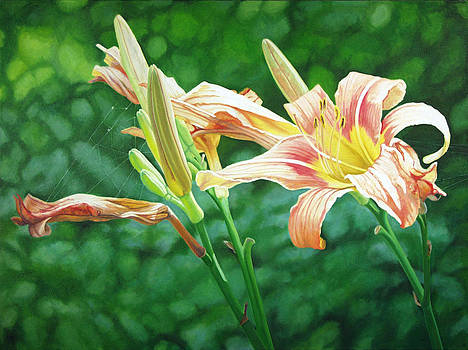 Lilies on the Web by - Harlan