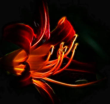 Lily Flame by Joetta West