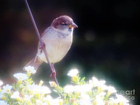 Judy Via-Wolff - Little Bird