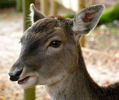 Little Deer by Karen Grist