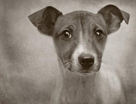 Little Jack Monochrome by Pat Abbott