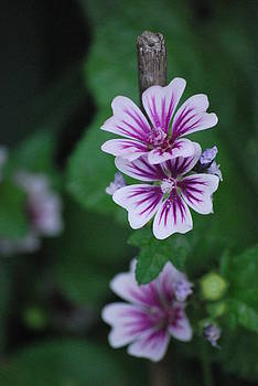 Little Purple Flowers by Amee Cave