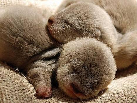 Little Sleep by Sunkies Fang