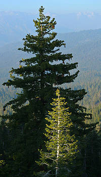 Adam Pender - Little Tree of Light