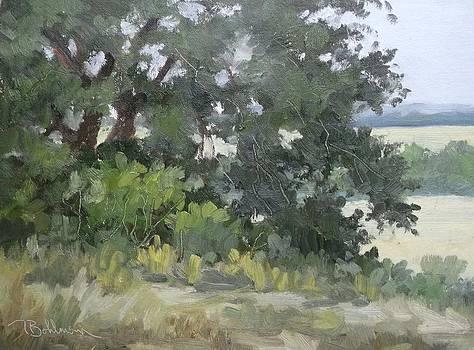 Live Oak south of Eugoly TX by Tina Bohlman