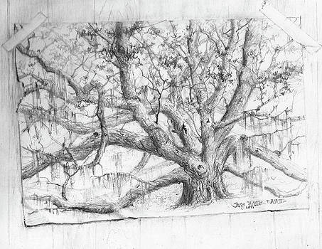 Jim Hubbard - Live Oak taped to wall
