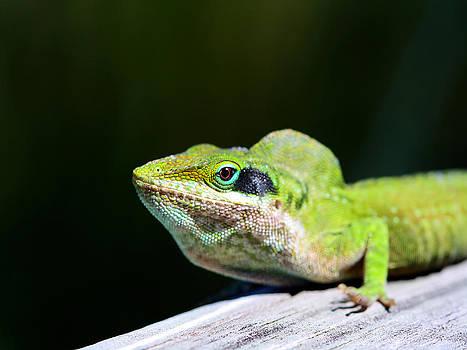 Lizard by Jenny Ellen Photography