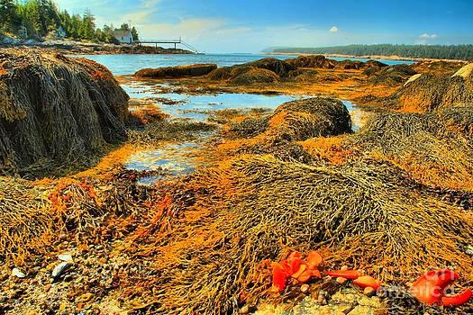 Adam Jewell - Lobster Stew