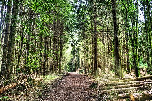 Log Trail by Kim Shatwell-Irishphotographer