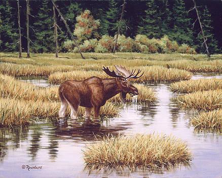 Richard De Wolfe - Lone Bull