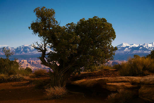 Marilyn Hunt - Lone Cypress and La Sal Mountains