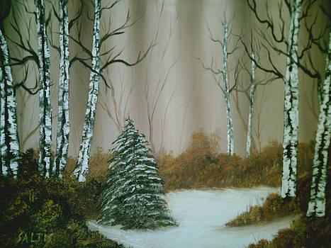 Lone Pine by Jim Saltis