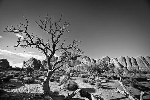 Lone Tree by Jeremy D Taylor