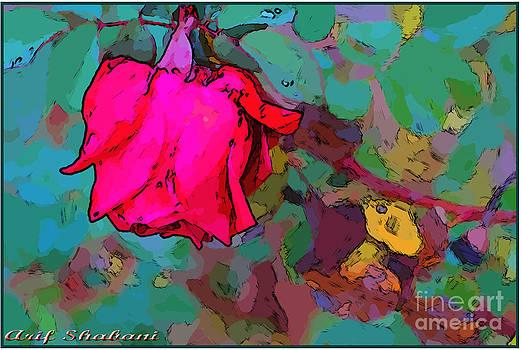 Lonly rose in autumn   by Arif Zenun Shabani