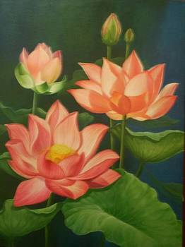 Lotus 1 by Tono