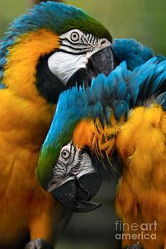Love Birds by John Kelly