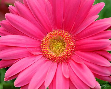Diana Haronis - Love Daisy