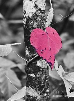 Love Nature by Rachel Clem