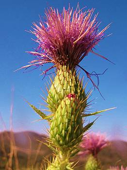 Love the Thistles  by Feva  Fotos